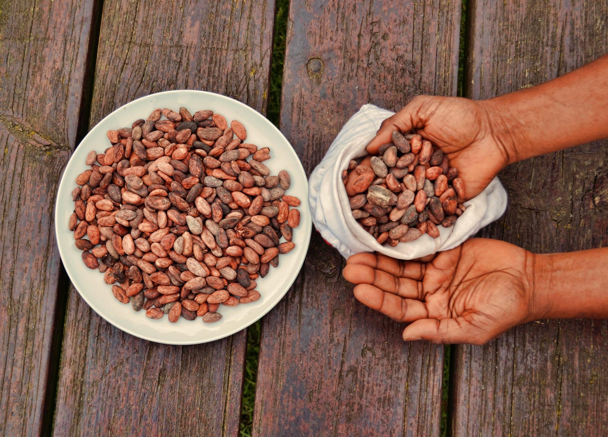 Какаовите зърна – екзотика и магия